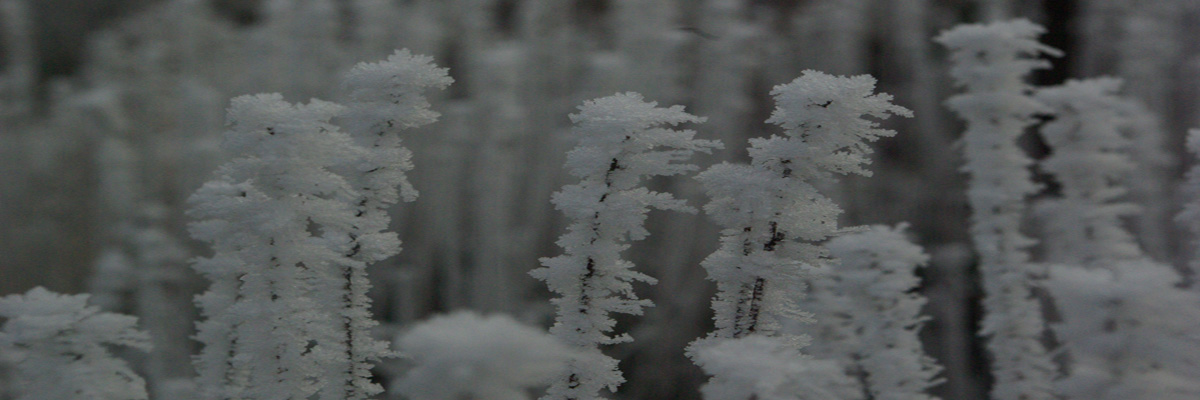 Winter Pflanzen (Header 2020-2021)